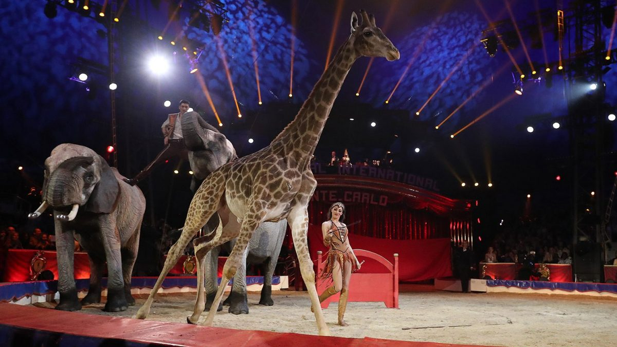 Are Wild Animals Used In Shows Now Banned In France?